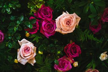 Rose and Scheffler
