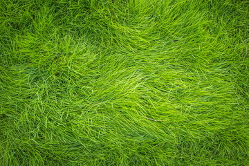 Green grass, Grass top view