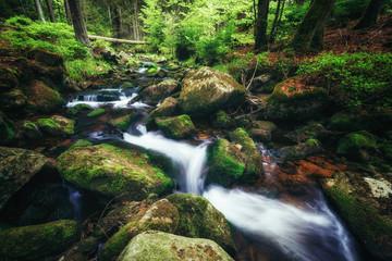 Wasserläufe durch mystische Wälder