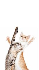 Playful Kitten Standing Reaching One Paw