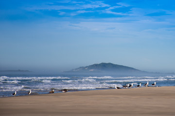 Gaivotas sobrevoando a praia