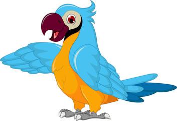 cute parrot cartoon posing