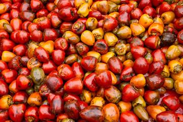 chotaduro, pupunha, pijuayo, pixbae, cachipay, pejibaye, tembe es una planta de la familia de las arecáceas.