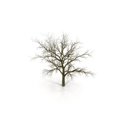 Winter Oak Tree Isolated on White Background 3D Illustration