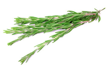 Fresh rosemary isolated on a white background
