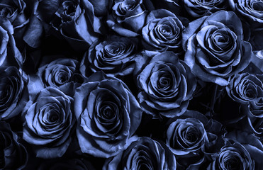 bark blue roses background.greeting card.