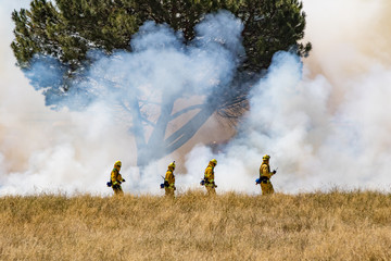 Firefighter Fighting Wildland Forest Grass Fire