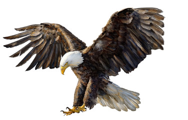 Eagle landing hand drawing on white background vector illustration.