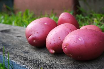 Fresh pink potatoes