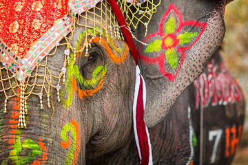 Close up of colorful painted elephant head