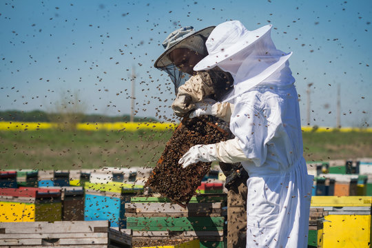 Beekeepers with bees swarming around them