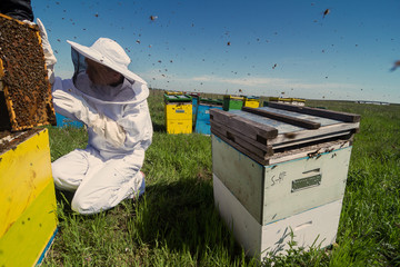 Apiarist watching over his bee hives