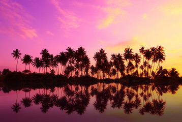 Tropical palm trees silhouettes with reflection in water at sunset