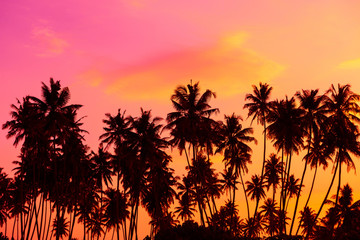 Palm trees silhouettes at twilight