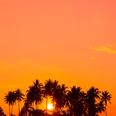 Warm tropical sunrise with palm trees silhouettes