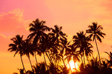 Tropical palm trees silhouettes at warm vibrant sunset on island beach