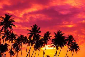 Tropical sunset with palm trees silhouettes