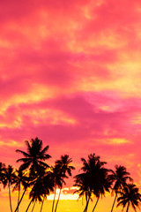 Tropical sunset with palm trees silhouettes and sky for copy space