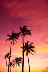 Tropical palm trees silhouettes at sunset