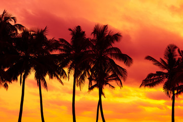 Tropical palm trees silhouettes