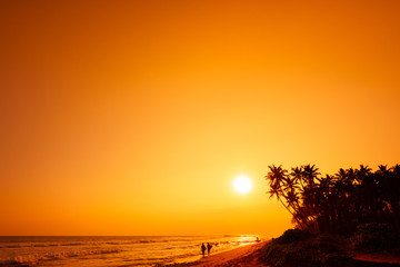 Tropical beach with surfers with surf board silhouettes and palm trees at sunset