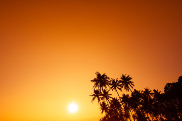 Tropical palm trees silhouettes over warm sunset over the sea