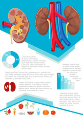 Human kidney infographic