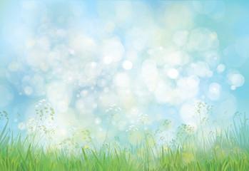 Vector green grass  and flowers border on bokeh, blue  backgroun