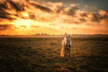 Horse in a Pasture with Orange Sunset