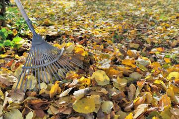 râteau dans feuilles mortes au sol