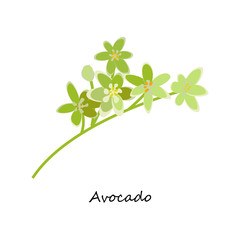 Avocado Flower. Honey planty. Botany. Honey flower colorful illustration. Isolated on white background. Vector eps10