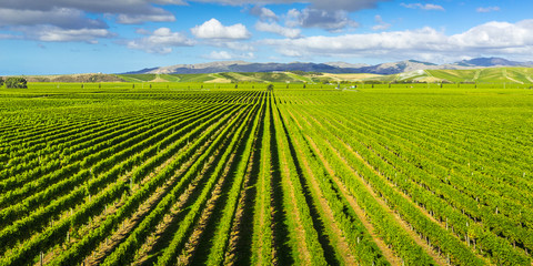 Foto op Textielframe Nieuw Zeeland Vineyard Marlborough region, New Zealand