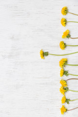 Dandelions on wooden white background. Top view. Spring, Summer concept. Flowers on white background.