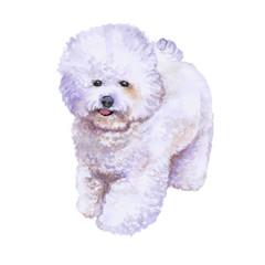 Watrcolor portrait of rare bichon frise dog
