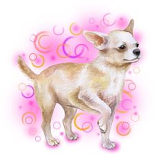 Watercolor closeup portrait of chihuahua dog isolated on pink background. funny dog posing on dog show. Hand drawn sweet home pet. Popular toy smallest dog. Greeting card design clip art illustration