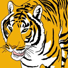 Tiger draw