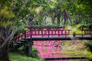 The bridge over the river with pink flowers.