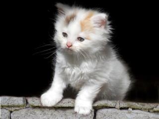 Cute kitten on wall