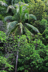 Palm in mangrove forest