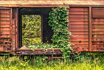 Railway wagon derelict captured by vegetation, close up view.