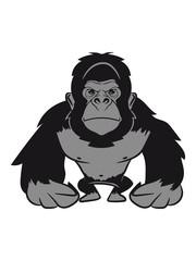 Gorilla agro cool