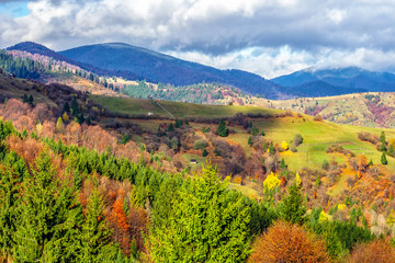 pine trees on hillside in autumn mountains