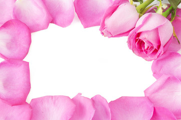 Pink rose petals with rose bud frame isolated on white background