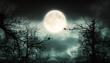 Foto auf Acrylglas Khaki Night Forest With Moon Background.