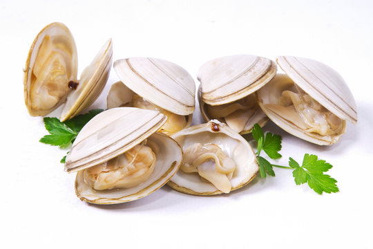 isolated clams