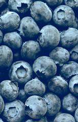 Blueberries horizontal background