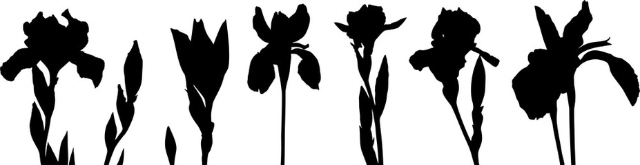 Silhouettes of irises. Silhouettes of different flowers