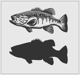 Bass fish illustration.
