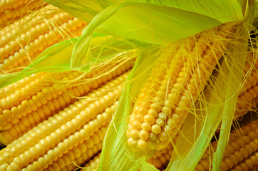 corn background