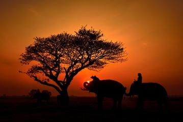 Silhouette many elephant